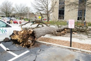 (Photo courtesy Andrew Mather) A tree blocks Clark Street after falling Thursday morning.