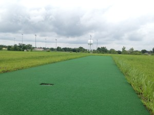 A new cricket pitch is located at the South Recreational Complex.